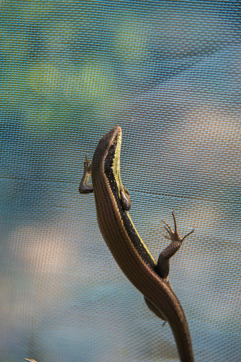 Animal Animals In The Wild Brown Lizard Lizard Close Up Lizard Nature Nature Scary