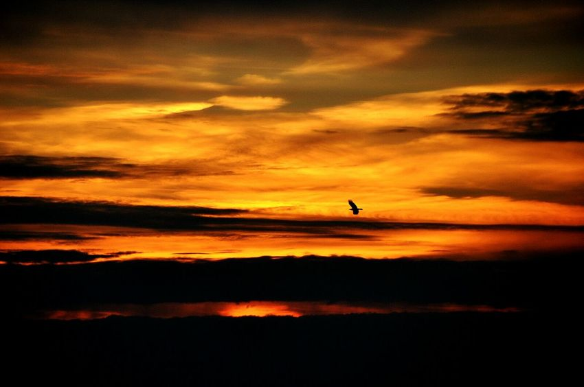 Showcase March Sunset Sunset Silhouettes Bird Silhouette Flying Bird Crow Crow In Flight Flying Crow Birds Dutch Dreamscapes EyeEm Best Shots - Sunsets + Sunrise Orange Sky Sky Colors Dreamscape Sunrise_sunsets_aroundworld EyeEm Best Shots Sky Colours Skyporn Taking Photos Check This Out Hello World Sky And Clouds Peaceful View Orange Color Orange Sunset