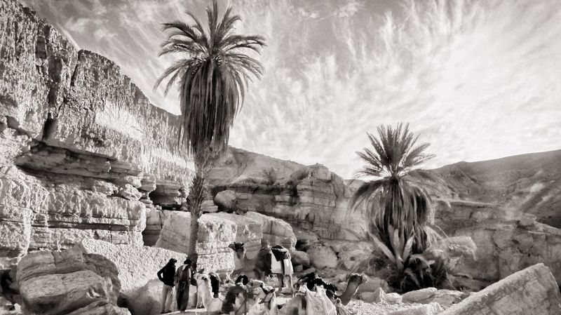 Trekking Tour with Camel and Beduines in the Desert of Sinai Oasis The Great Outdoors - 2015 EyeEm Awards The Traveler - 2015 EyeEm Awards Shades Of Grey Ägypten  Palm Trees Rock
