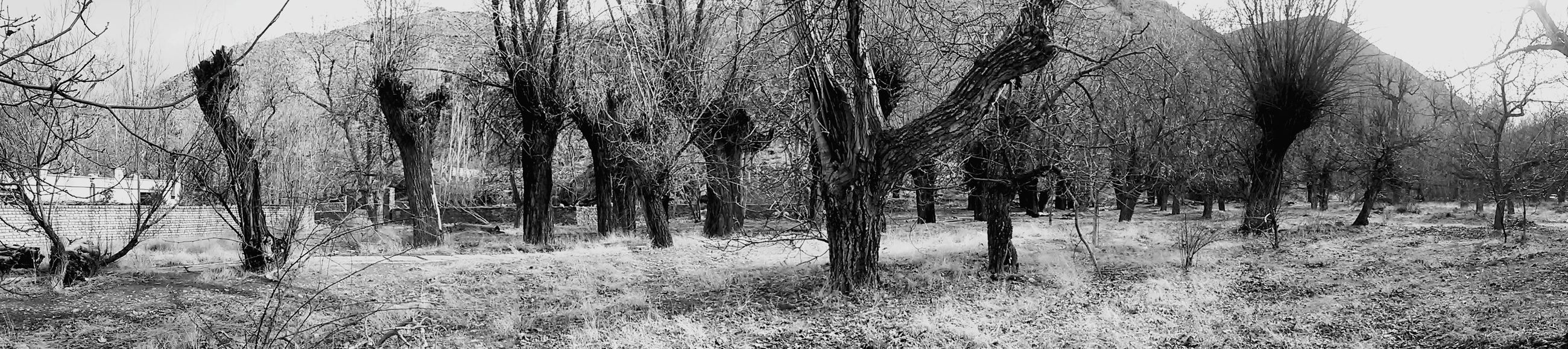"The Last Panaroma Photo Of ""Freez hand"" Village Nature Tree Eyes New Eyes Free Life Style Should Be Here Silent Moment Iran Freez Hand Black&white Black & White Black And White Blackandwhite Blackandwhite Photography Black And White Photography Soul Full Frame MJ028"