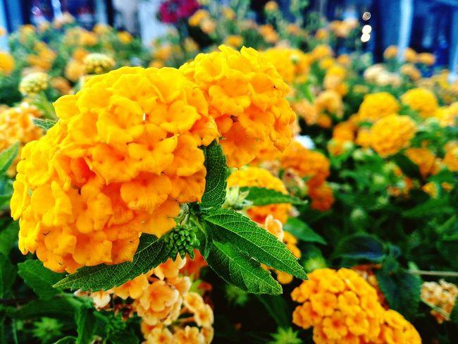 Colors Color Palette Flowers