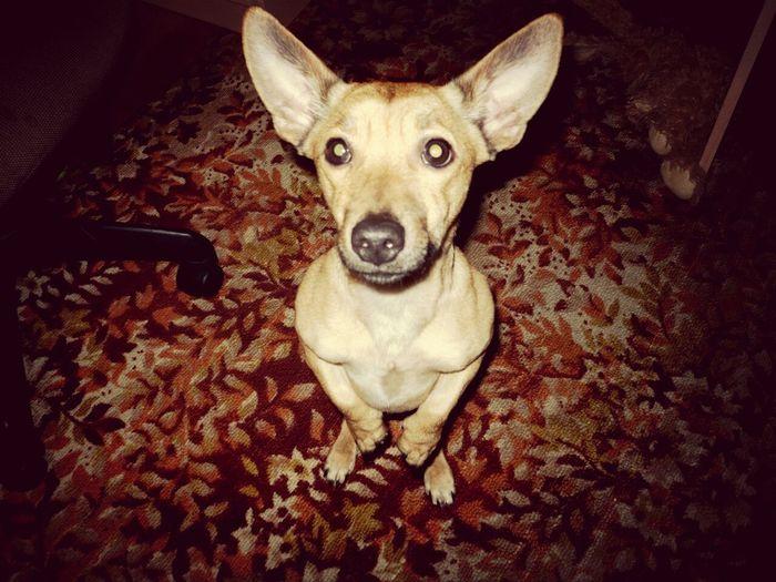tobi prosit vkusnyashku) I Love My Dog