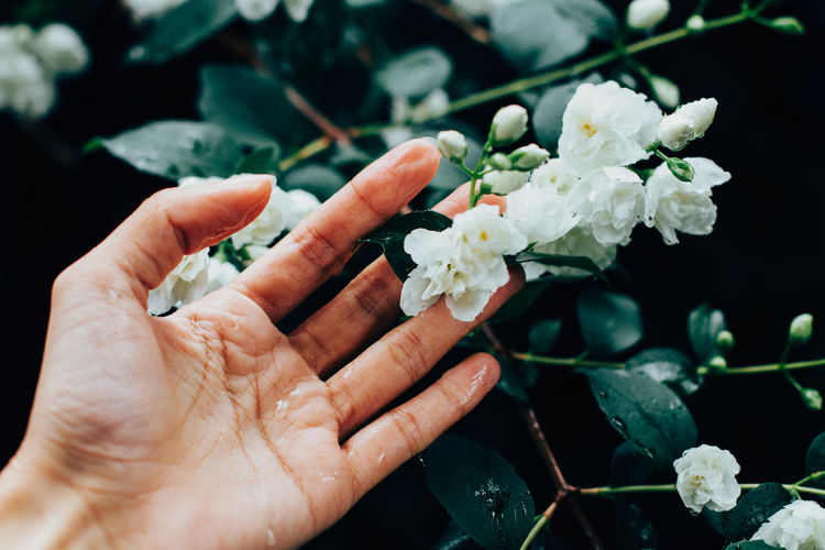 Cropped wet hand of woman holding jasmine on plant