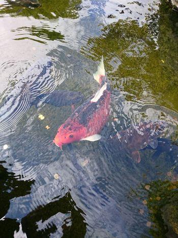 London Kyoto Garden Eeyem Photography Reflection Carpe