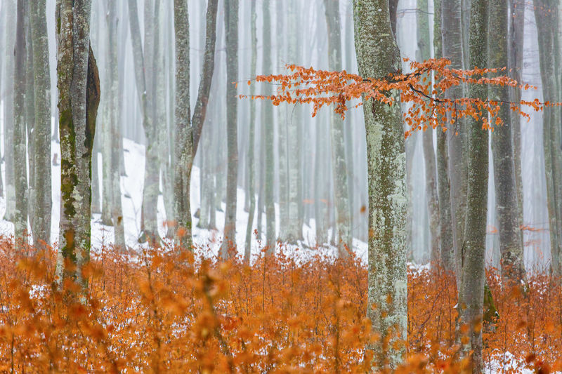 Autumn trees in forest during winter