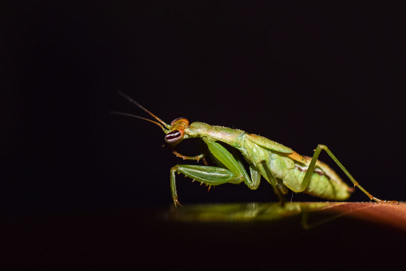 Close-up of grasshopper