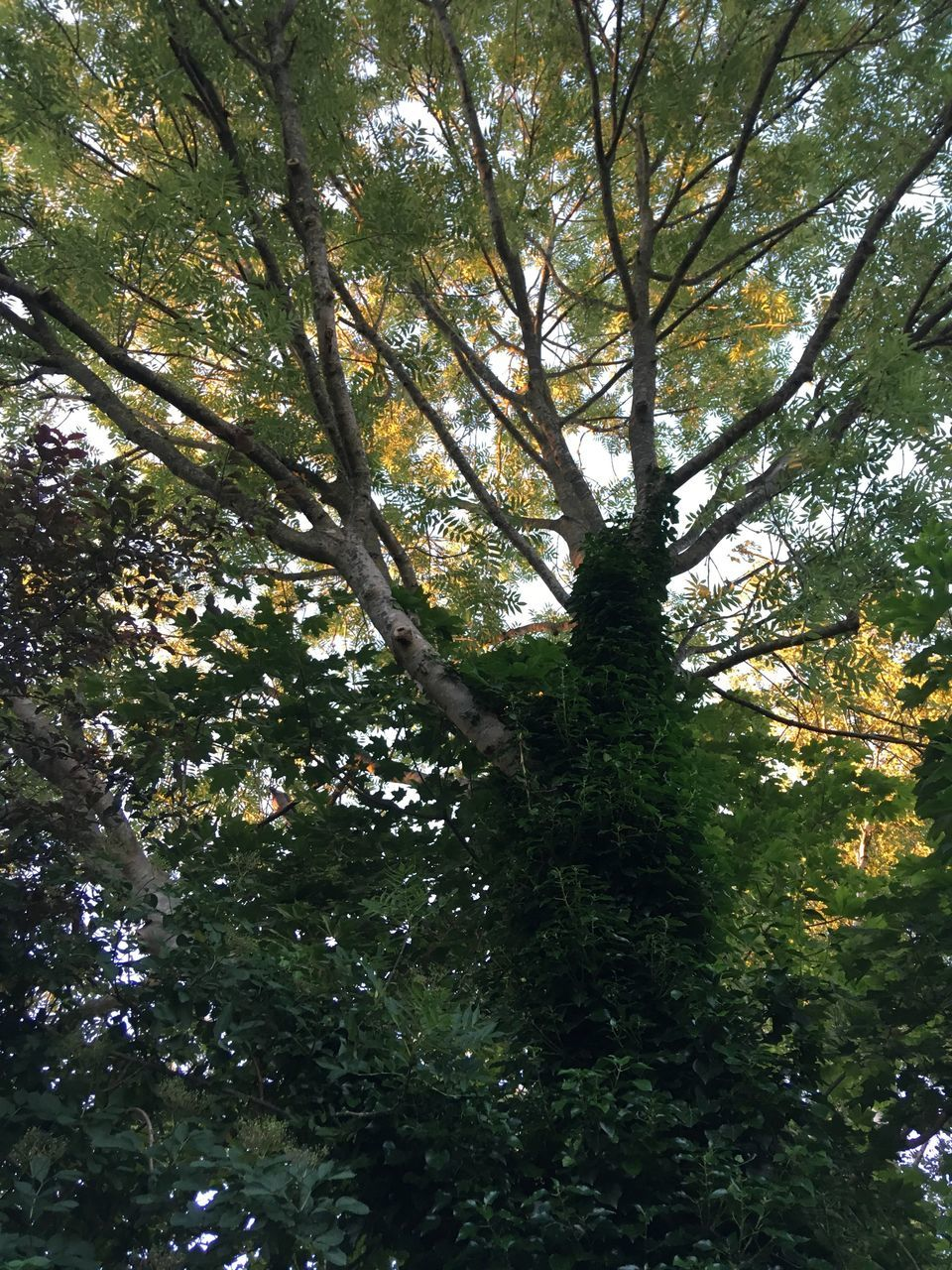 tree, low angle view, growth, nature, beauty in nature, forest, day, green color, branch, no people, tranquility, outdoors, scenics, tree trunk, sky
