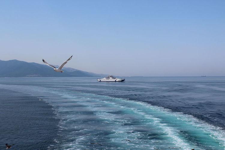 Sea and Seagull