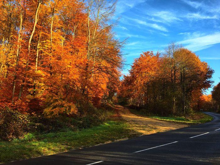 L'automne chez