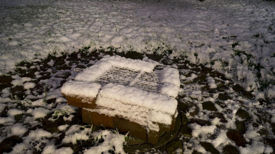 Grass Schnee Schneelandschaft Winter Wintertime Abendstimmung Close-up Cold Temperature Day Dämerung Grill Nature No People Outdoors Salt - Mineral Snow Weiss White Color Winter Wite