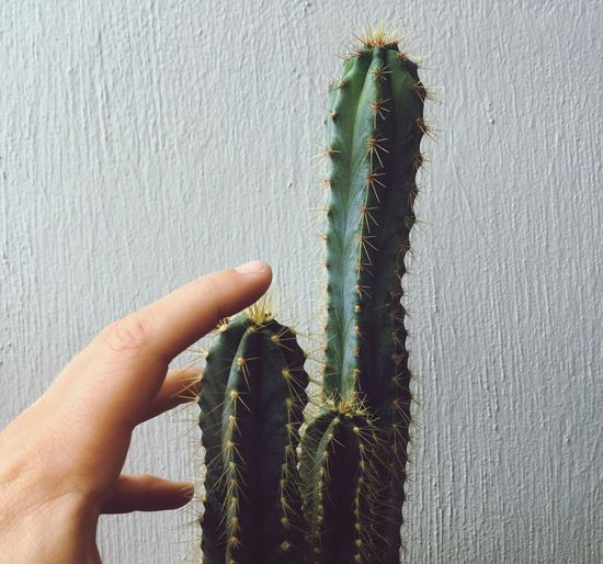 Human Hand Real People Human Finger Cactus Holding Human Body Part Growth Plant Green Color Spiked One Person Day Nature Outdoors Saguaro Cactus Close-up People