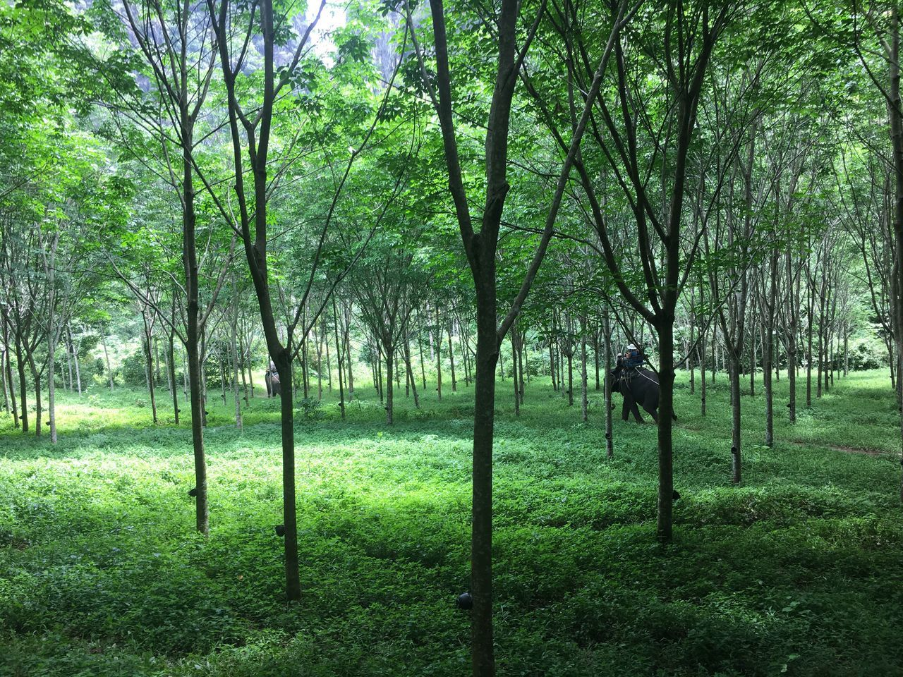 tree, grass, one person, nature, field, outdoors, growth, green color, tranquility, real people, full length, day, landscape, beauty in nature, people