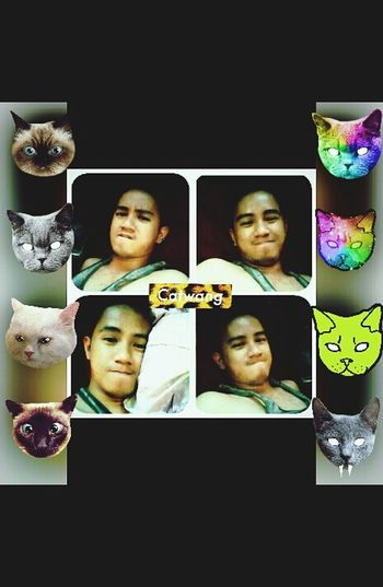 CatWanging Nights!!!Paying tribute 2 my beloved Felines Catlover Cats Cat Feline Pets CatWangNiggah! CATWANG Photoeditor Photoediting Selfie ✌ #xoxo #