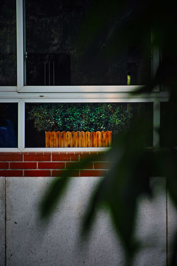 清凉叶下,清凉小窗,看是清凉,确也清凉。 window Window No People Shadow Green Color Plant Tree Leaves