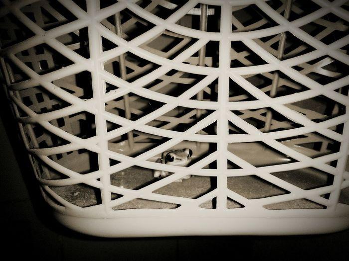 Refugee Frog takes shelter in a basket in Rain empire. Frog Animal Peta Shelter Basket Rain Teritory Teritorial The Traveler - 2018 EyeEm Awards The Creative - 2018 EyeEm Awards HUAWEI Photo Award: After Dark Autumn Mood