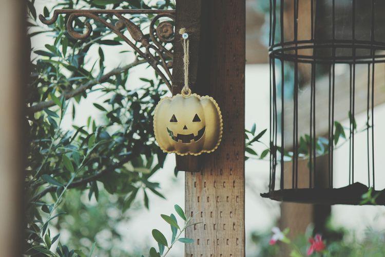 わっはっはっは~‼Happy Halloween EyeEm Best Shots Gerden In My Garden 花と庭 Nature Plant Green Color Metal Focus On Foregroundちと憎らしい顔😆