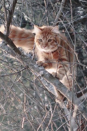 Portrait of cat sitting on branch