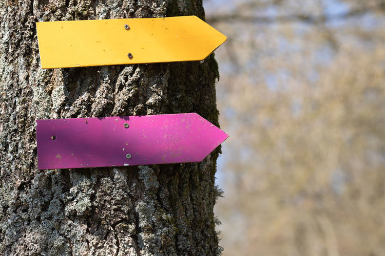 Close-up of pink sign on tree trunk