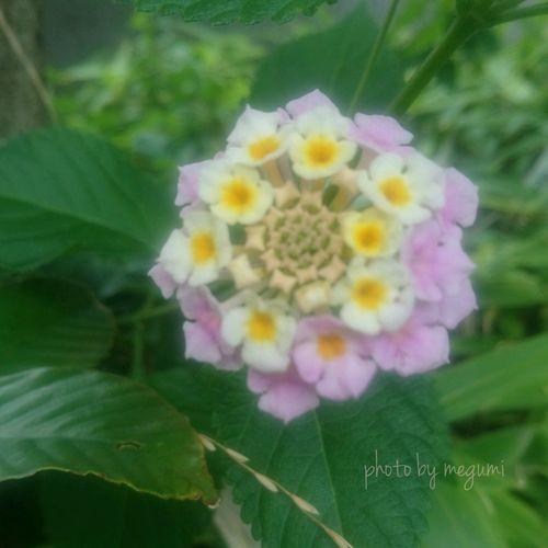 可愛い小さなお花たち Flower Freshness Leaf Plant Growth Nature Close-up Fragility Petal Day Outdoors No People Beauty In Nature Pink Color Flower Head Multi Colored