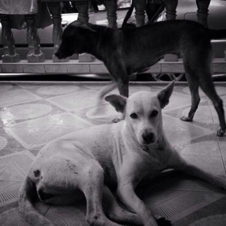Dog Dogstagram Pet13 Blackandwhite
