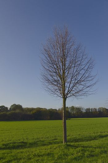 SIngle tree at