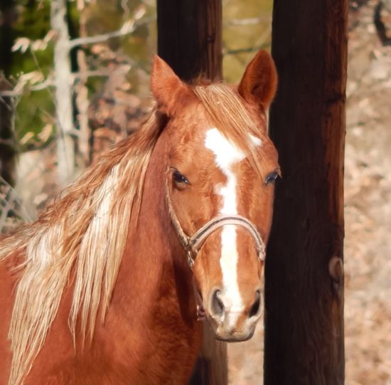 My beautiful Savannah. Tadaa Community EyeEm Animal Lover Rescue Horse Eyeemphotography I Love Taking Pictures <3 Nature Photography Naturelovers Nature_collection Tadaa Friends EyeEm Nature Lover My Horse I Love My Horse Beautiful Girl Nikon Photography West Virginia United States
