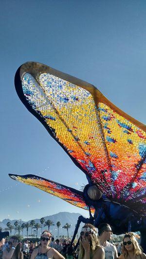 Beautiful butterfly Coachella Butterfly Installation