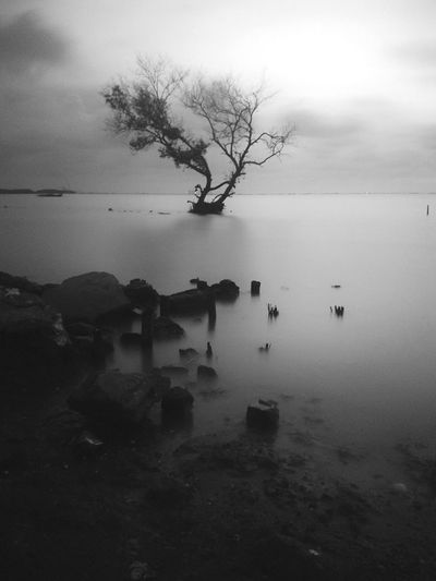 Water Tree Outdoors Sky Nature Beauty In Nature Day No People Travel Destinations Long Exposure Nature