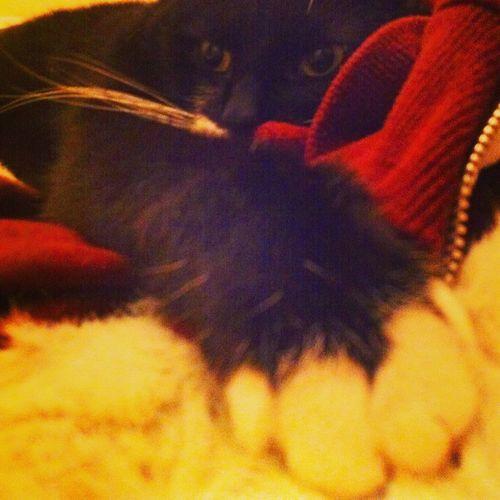 Neko Furmagoo Snug as a bug Cat