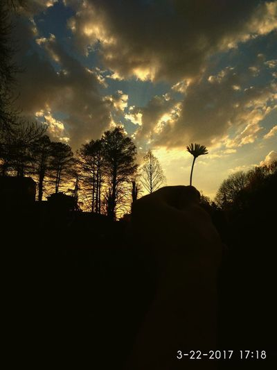 Welcome To Black black was always my thing Sunset Sky Cloud - Sky Silhouette Outdoors Nature Tree City Satisfying Nature Beauty In Nature Picture One Person Human Hand Flower