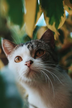 EyeEm Selects Domestic Cat Pets Domestic Animals Feline Animal Themes One Animal Whisker Portrait Nose Cute No People Close-up Ear Mammal Day Kitten