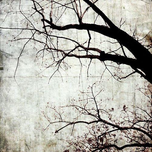 เงาไม้ // ShadowWood