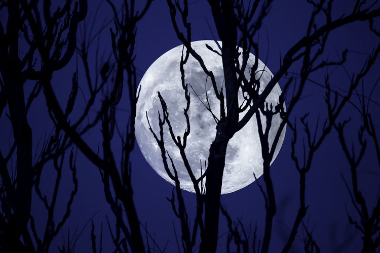 The first Supermoon of 2018 rising behind barren trees of heaven. 2018 Full Moon Halloween Nightphotography Winter Astrophotography Bare Tree Beauty In Nature Branch Close-up Cold Fullmoon Low Angle View Moon Nature Night No People Outdoors Scary Sillouette Sky Spooky Super Moon Supermoon Tree