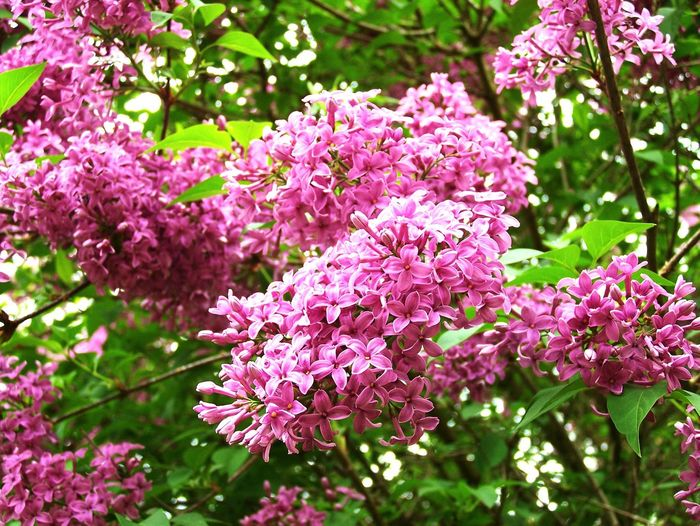 Flower Flwoers Beuty Of Nature Natural Beauty Flores, Bosques Y Naturaleza. Beauty In Nature Enjoying Life