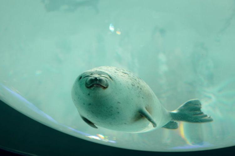 Close-up of seal swimming in aquarium