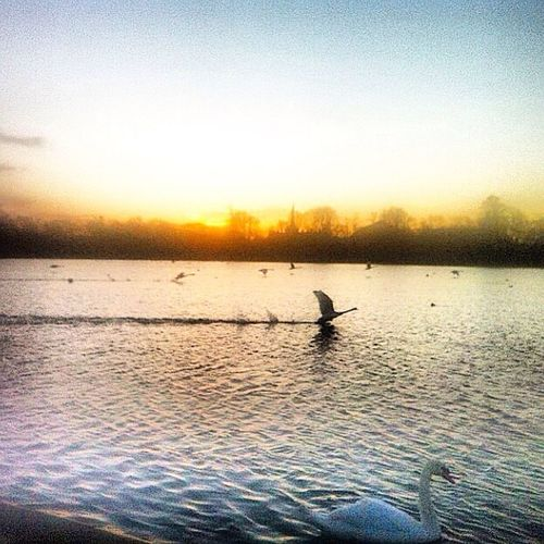Departing What Does Freedom Mean To You? Sun Set Kensington Gardens