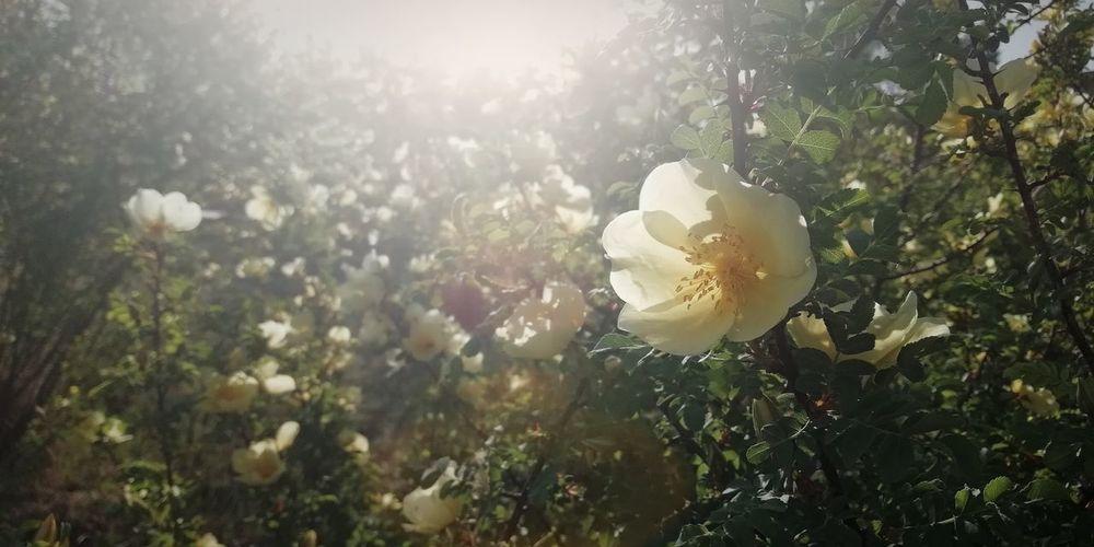Flower Tree Sunlight Summer Sun Lens Flare Leaf Back Lit Close-up Sky Plant