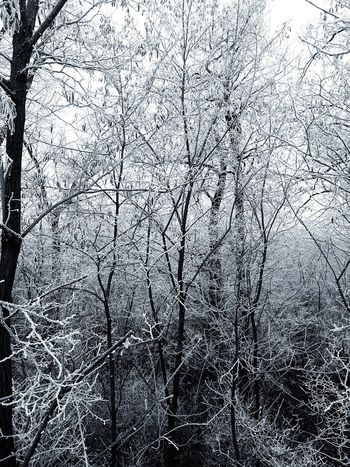 Freezing Freezing ❄ Freeze Beutiful  Beautiful Cold Winter ❄⛄ Winter Cold Ice Trees Village White IPhone IPhoneography IPhone SE Nature Tree In Winter On My Way To  My Love❤