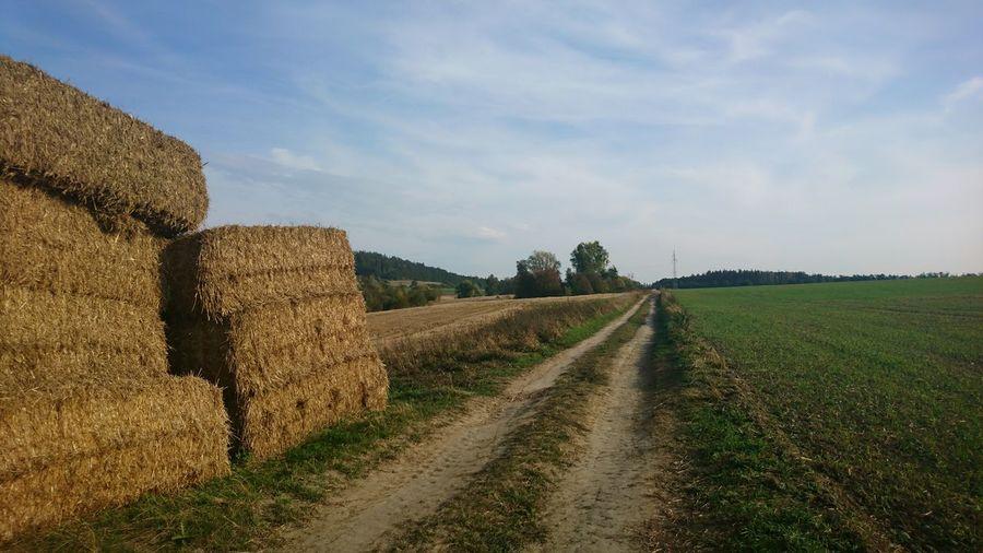 Narrow Dirt Road Along Countryside Landscape