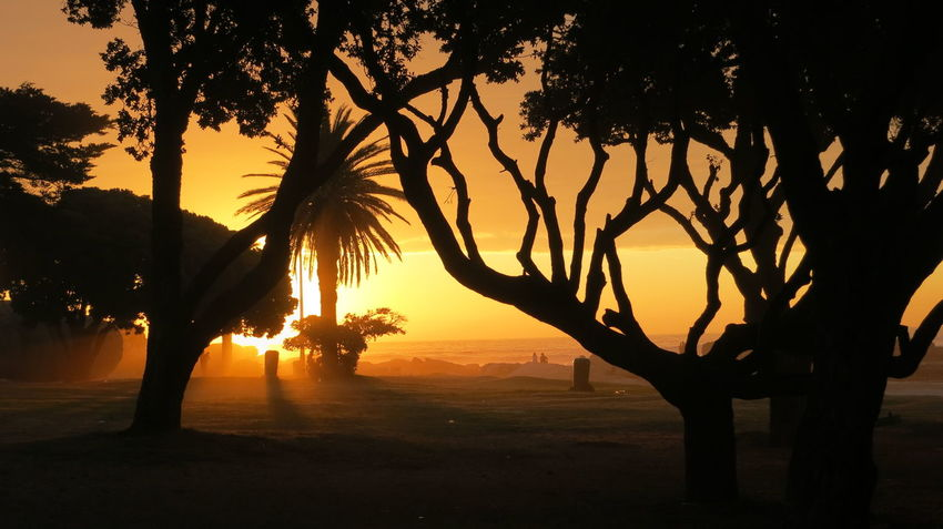 Beauty In Nature Branch Landscape Nature No People Outdoors Palm Tree Scenics Silhouette Sky Sunset Tranquil Scene Tranquility Tree
