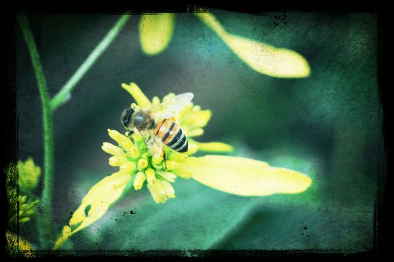Relaxing Flowers Bees Love Macro Canon Photography DSLR