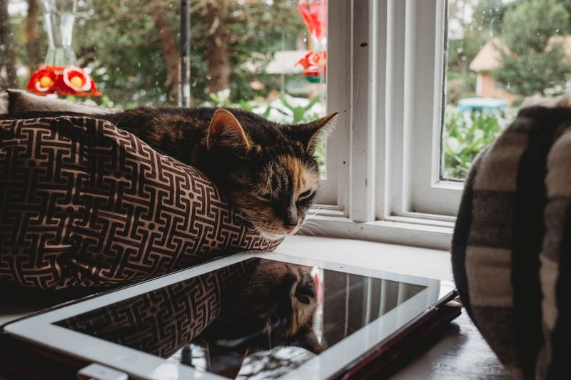 Home is where the cat is. Pets Domestic Animals Domestic Animal Themes Mammal Vertebrate Animal One Animal Whisker No People Glass - Material Transparent Day Indoors  Home Interior Cat Feline Window Domestic Cat