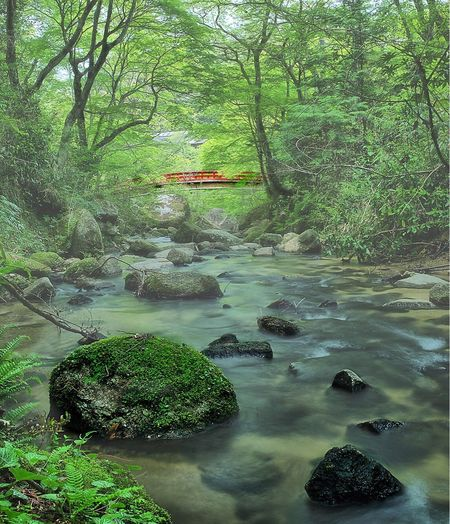 -Smooth Morning- Tree Nature Water Beauty In Nature Forest Rock - Object Lush Foliage Scenics Tranquil Scene Tranquility Outdoors Landscape No People Moss Green Color Branch River Waterfall Day Growth Seto Japan Riverside Sigma 35mm Art Travel