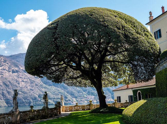 Tree Sky Villa Del Balbianello No People Lawn Day Outdoors Nature Grass