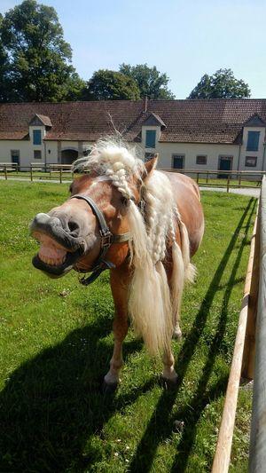 Horse One Animal Sorrisone Eye Em Nature Lover 😊😊be Happy
