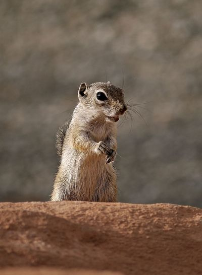 Animal Themes Animal Wildlife Animals In The Wild Close-up Day Mammal Nature No People One Animal Outdoors Small Animal Streifenhörnchen
