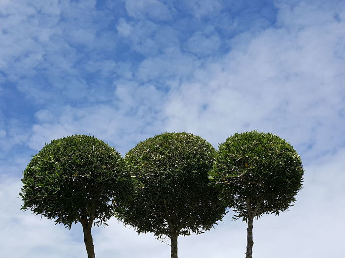 Three Three Trees Minimalism Minimal Minimalobsession Minimalistic Minimallandscape Minimal Landscape Minimalism Photography Minimalart Tree Single Tree Sky Copy Space Tree Trunk Social Issues Nature Beauty In Nature Cloudscape Green Color Plant Part Innovation Tranquility