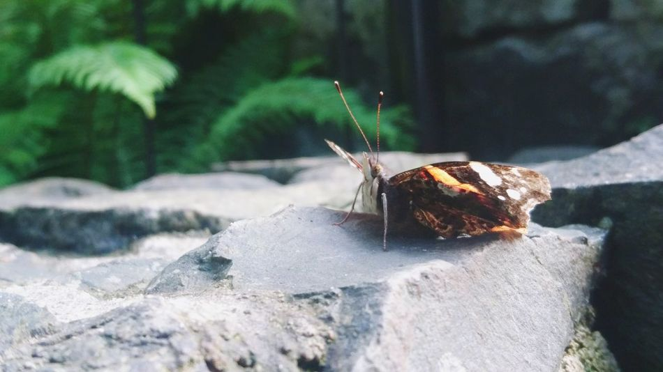 EyeEm Selects Animal Wildlife Animals In The Wild Outdoors One Animal Insect Nature No People Day Close-up Sunlight Animal Themes Beauty In Nature Butterfly Butterfly Macro Butterfly Garden