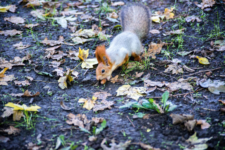 High angle view of squirrel on land