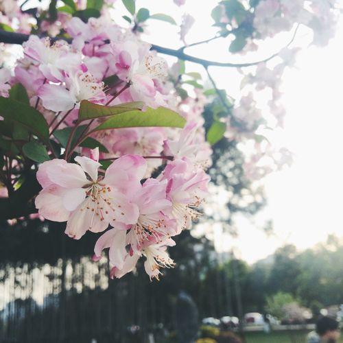 Enjoying Life 🌱春